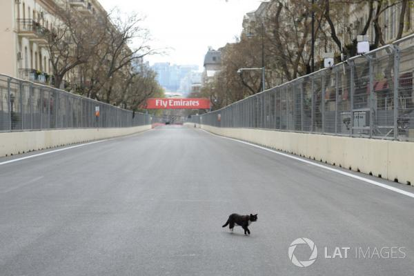 f1-azerbaijan-gp-2018-track-view-and-cat.thumb.jpg.ed52070313d7412fba7864d73163f96f.jpg